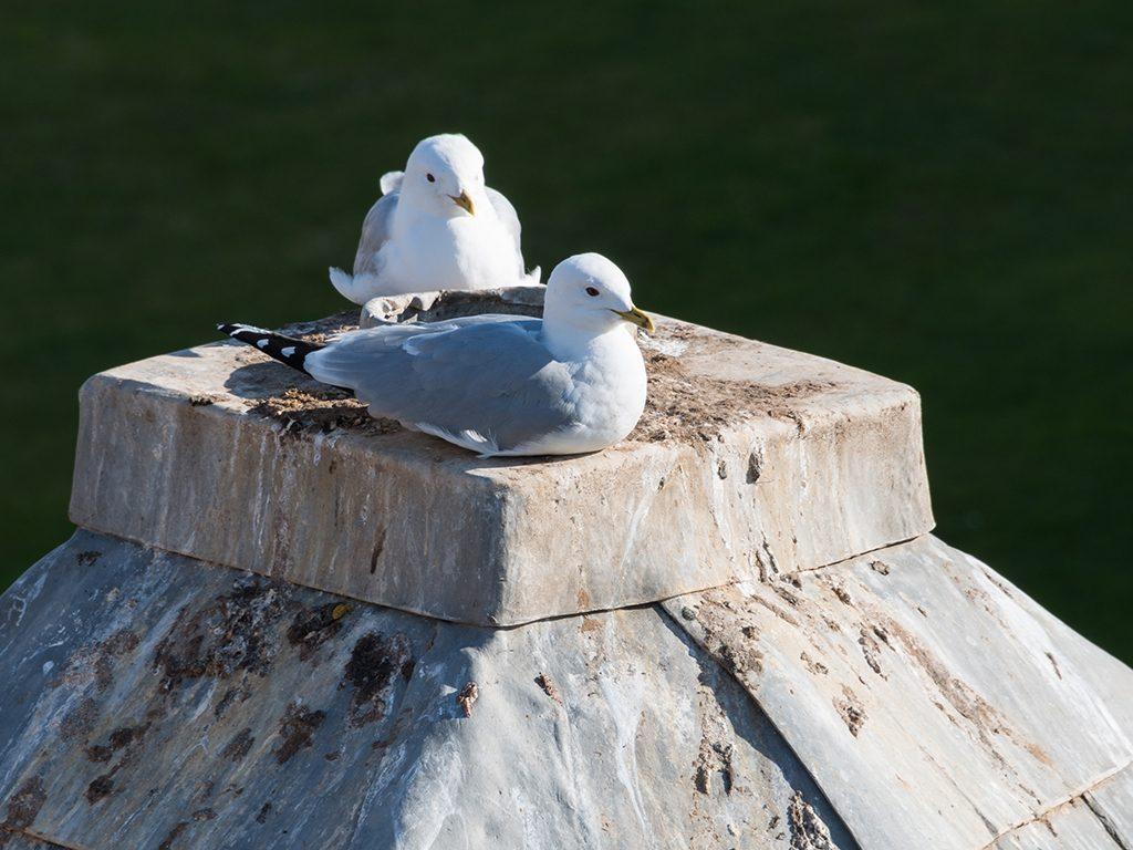 Seagulls sitting on a building's roof