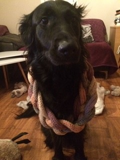 A black dog wearing a knitted scarf