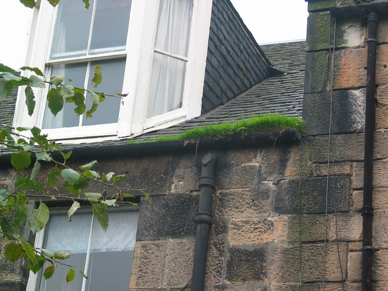 A stone building with grass growing out from the gutter