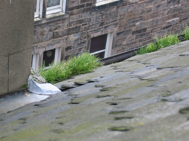 A slate roof and a gutter filled with grass