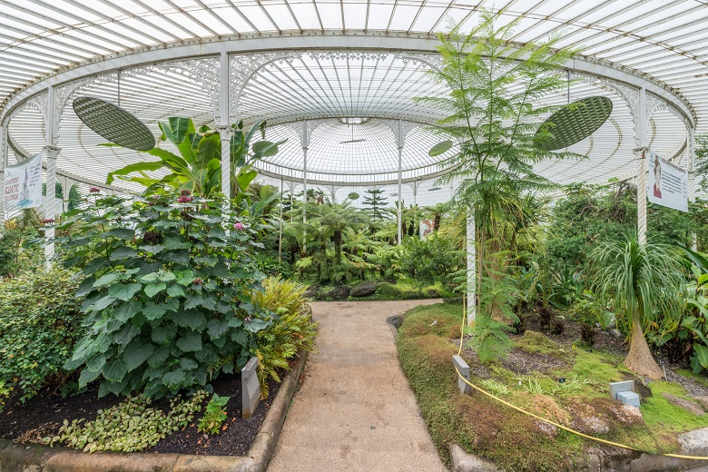 A historic, iron glasshouse filled with plants